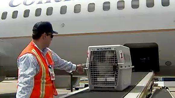 Uçuşlarda Evcil Hayvan Taşıma Prosedürü